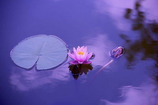 Vis-Med for Healing meditation